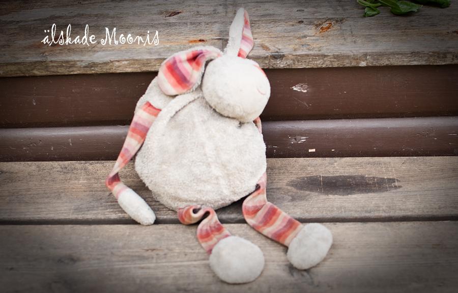 Kaninen Moonis