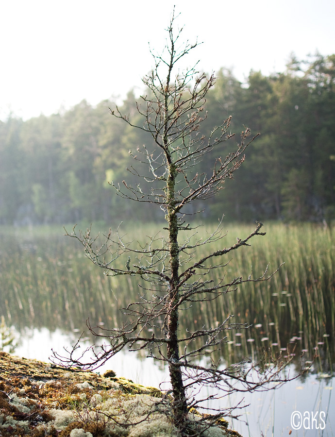 Ett litet träd