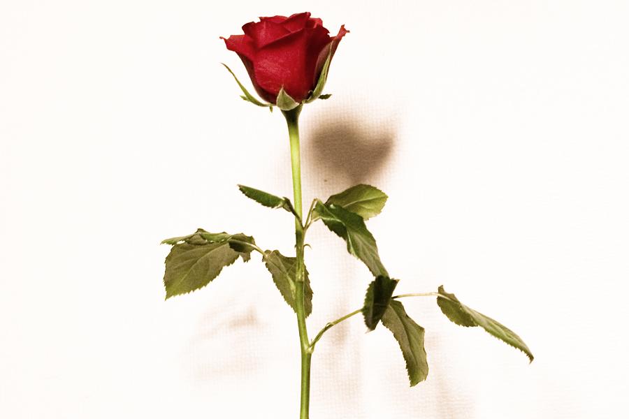 rosendoft
